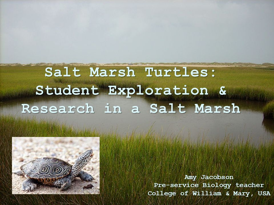Salt Marsh Turtles: Student Exploration & Research in a Salt Marsh Amy Jacobson Pre-service Biology teacher College of William & Mary, USA