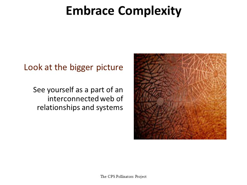 The CPS Pollinators Project Embrace Complexity Look at the bigger picture See yourself as a part of an interconnected web of relationships and systems