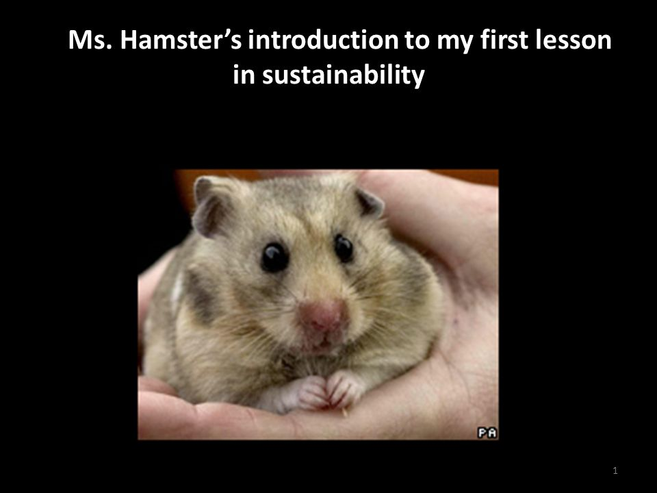 A Ms. Hamster's introduction to my first lesson in sustainability 1