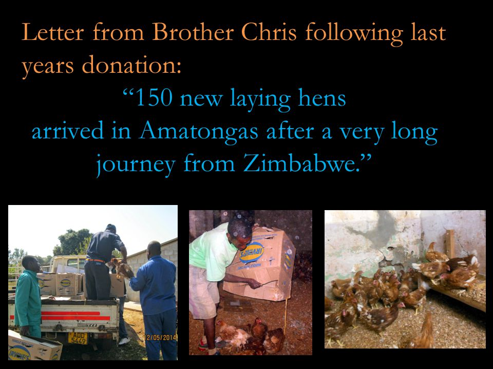 Letter from Brother Chris following last years donation: 150 new laying hens arrived in Amatongas after a very long journey from Zimbabwe.
