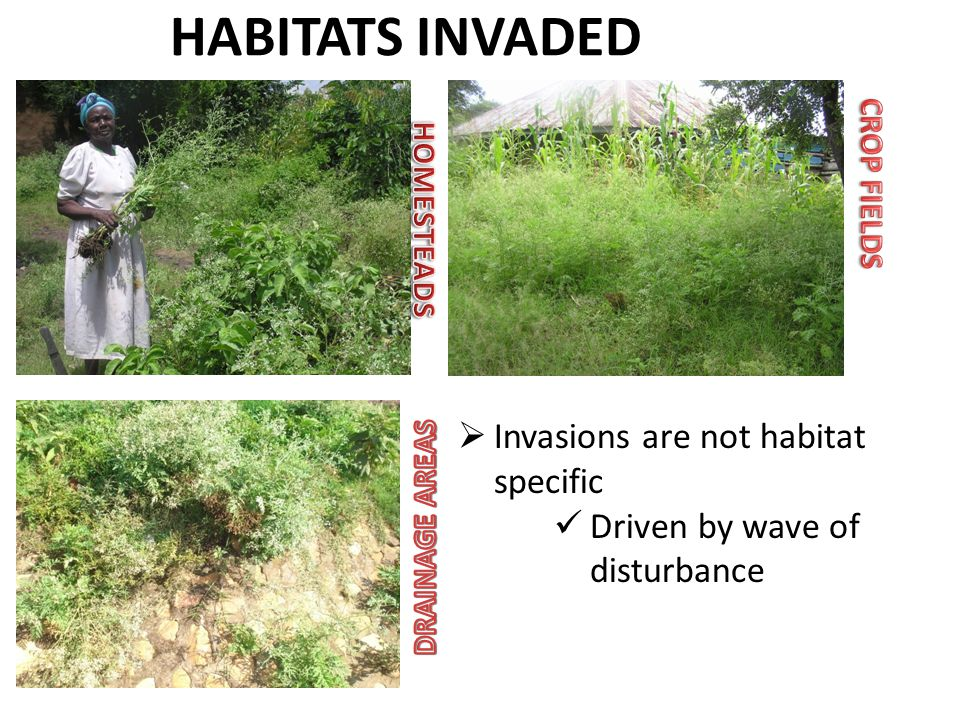  Invasions are not habitat specific Driven by wave of disturbance
