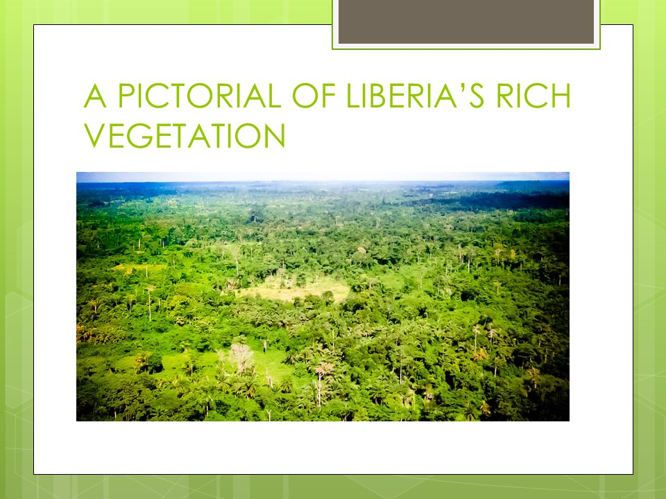 A PICTORIAL OF LIBERIA'S RICH VEGETATION