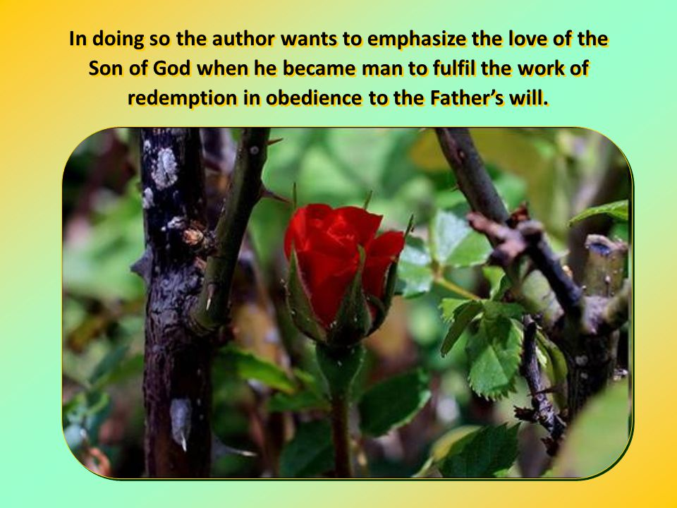Text by Chiara Lubich Behold, I come to do your will. Behold, I come to do your will.