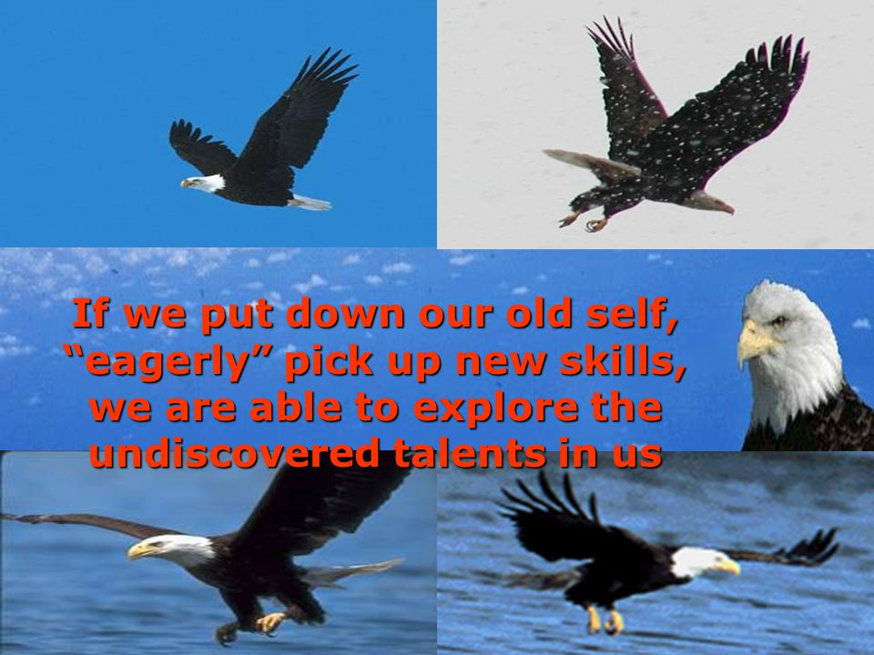 If we put down our old self, eagerly pick up new skills, we are able to explore the undiscovered talents in us