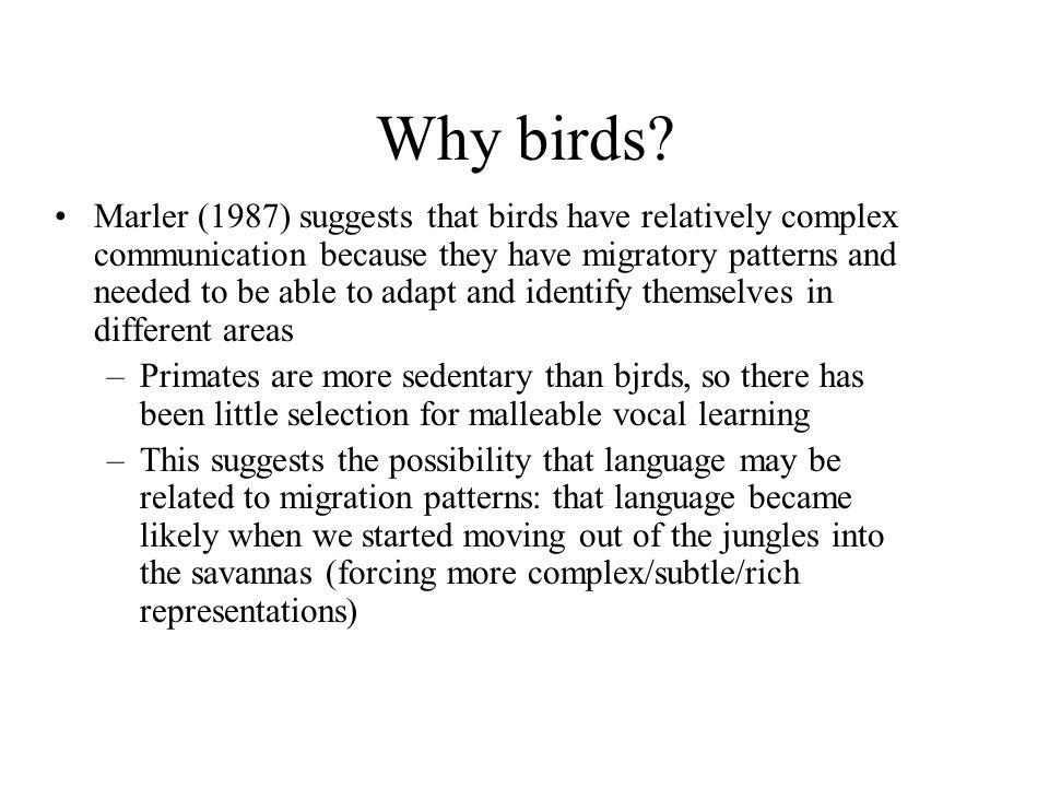 Why birds.