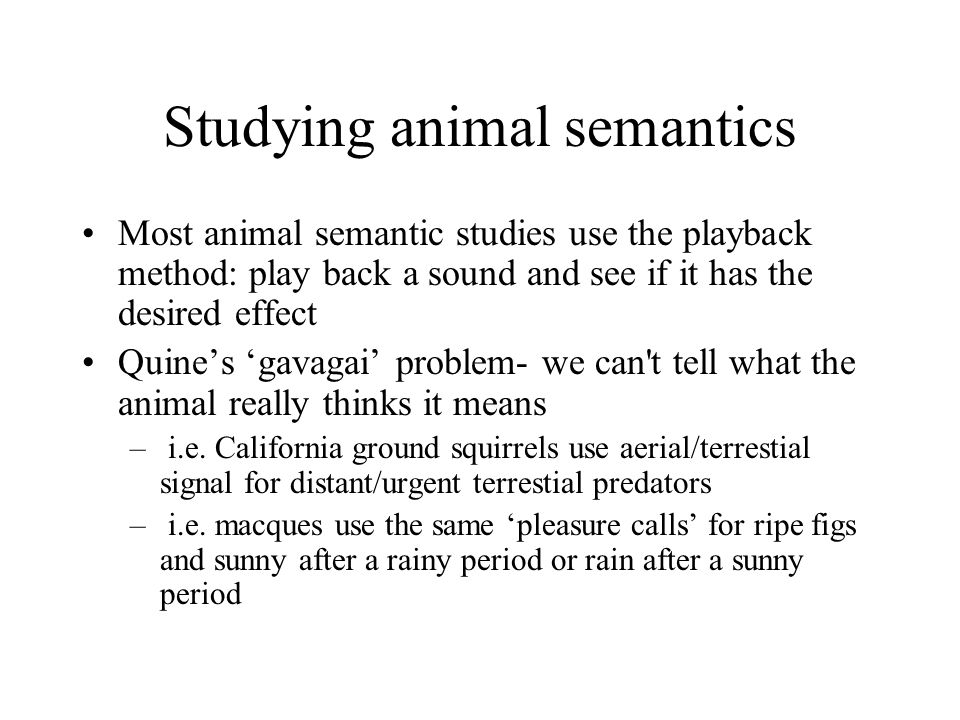 Studying animal semantics Most animal semantic studies use the playback method: play back a sound and see if it has the desired effect Quine's 'gavagai' problem- we can t tell what the animal really thinks it means – i.e.