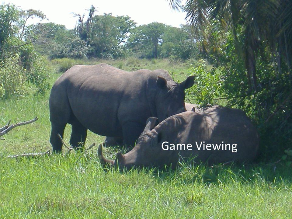 Game Viewing