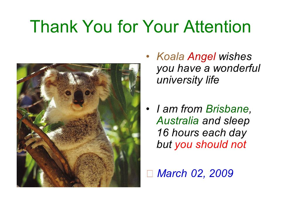 Thank You for Your Attention Koala Angel wishes you have a wonderful university life I am from Brisbane, Australia and sleep 16 hours each day but you should not ☆ March 02, 2009