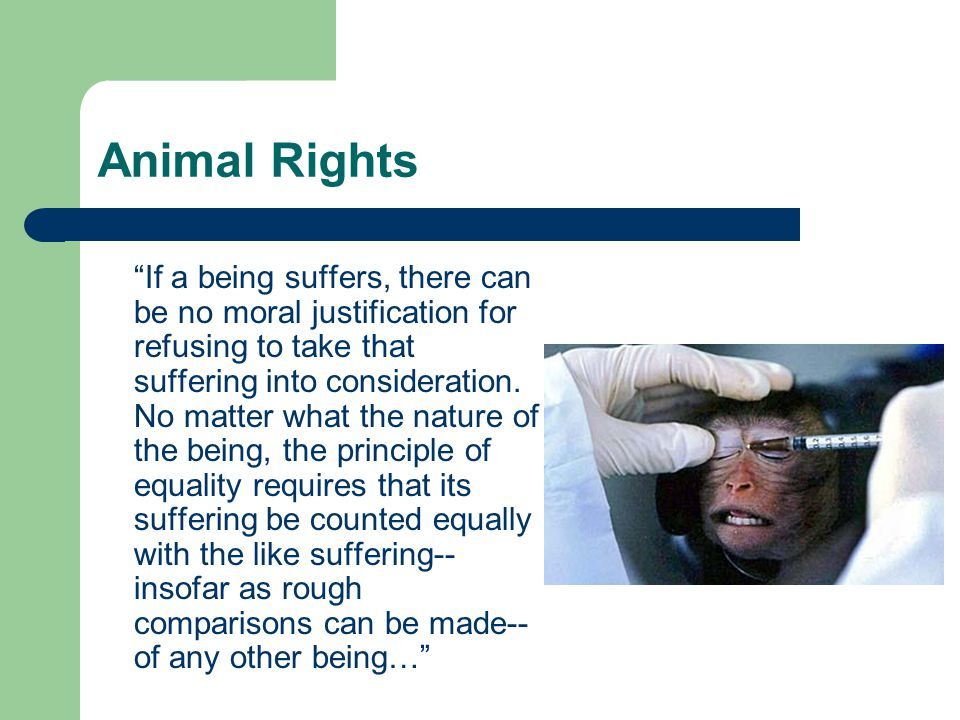 Animal Rights If a being suffers, there can be no moral justification for refusing to take that suffering into consideration.