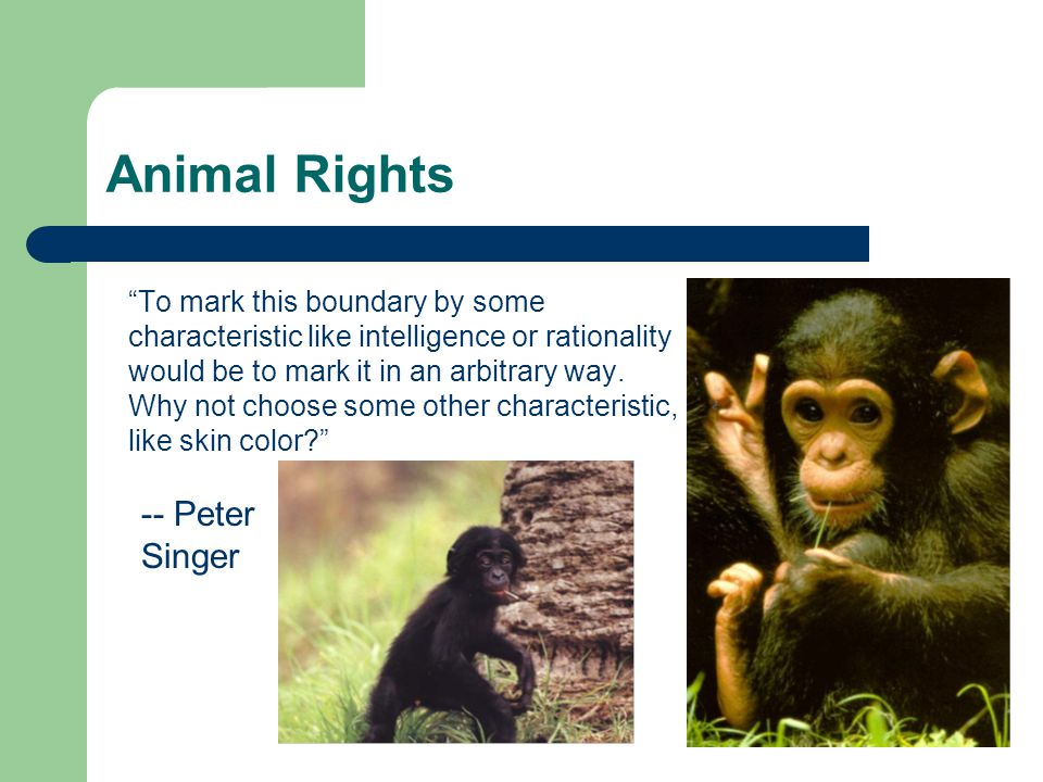 """Animal Rights """"To mark this boundary by some characteristic like intelligence or rationality would be to mark it in an arbitrary way. Why not choose s"""
