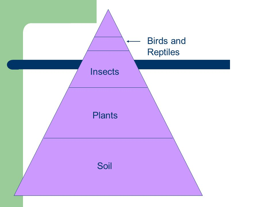 Soil Plants Insects Birds and Reptiles