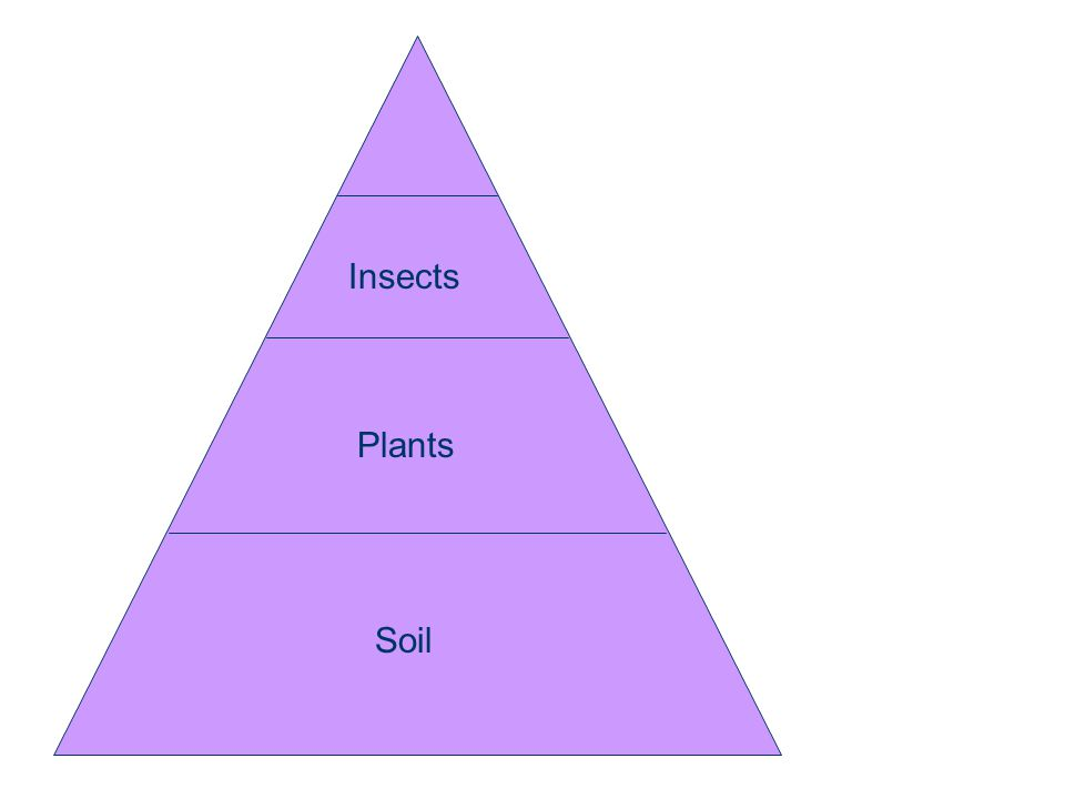 Soil Plants Insects