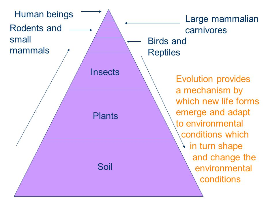Soil Plants Insects Birds and Reptiles Rodents and small mammals Large mammalian carnivores Human beings Evolution provides a mechanism by which new life forms emerge and adapt to environmental conditions which in turn shape and change the environmental conditions