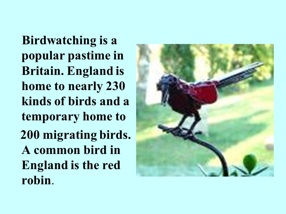 Birdwatching is a popular pastime in Britain.