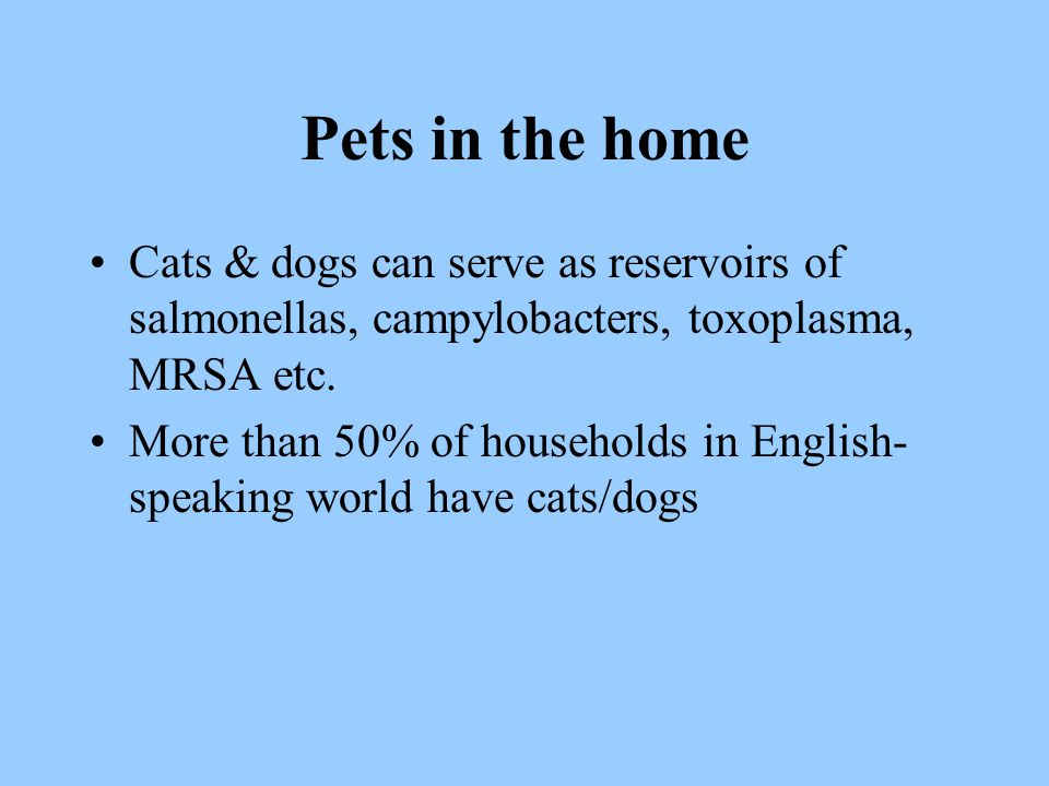 Pets in the home Cats & dogs can serve as reservoirs of salmonellas, campylobacters, toxoplasma, MRSA etc. More than 50% of households in English- spe