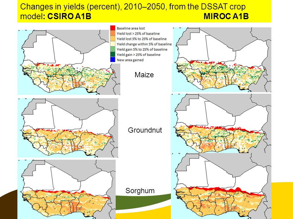 Changes in yields (percent), 2010–2050, from the DSSAT crop model: CSIRO A1B MIROC A1B Maize Sorghum Groundnut