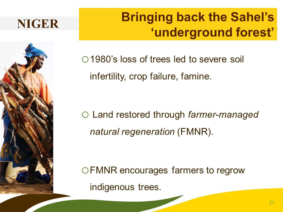 21 NIGER Bringing back the Sahel's 'underground forest' o 1980's loss of trees led to severe soil infertility, crop failure, famine. o Land restored t