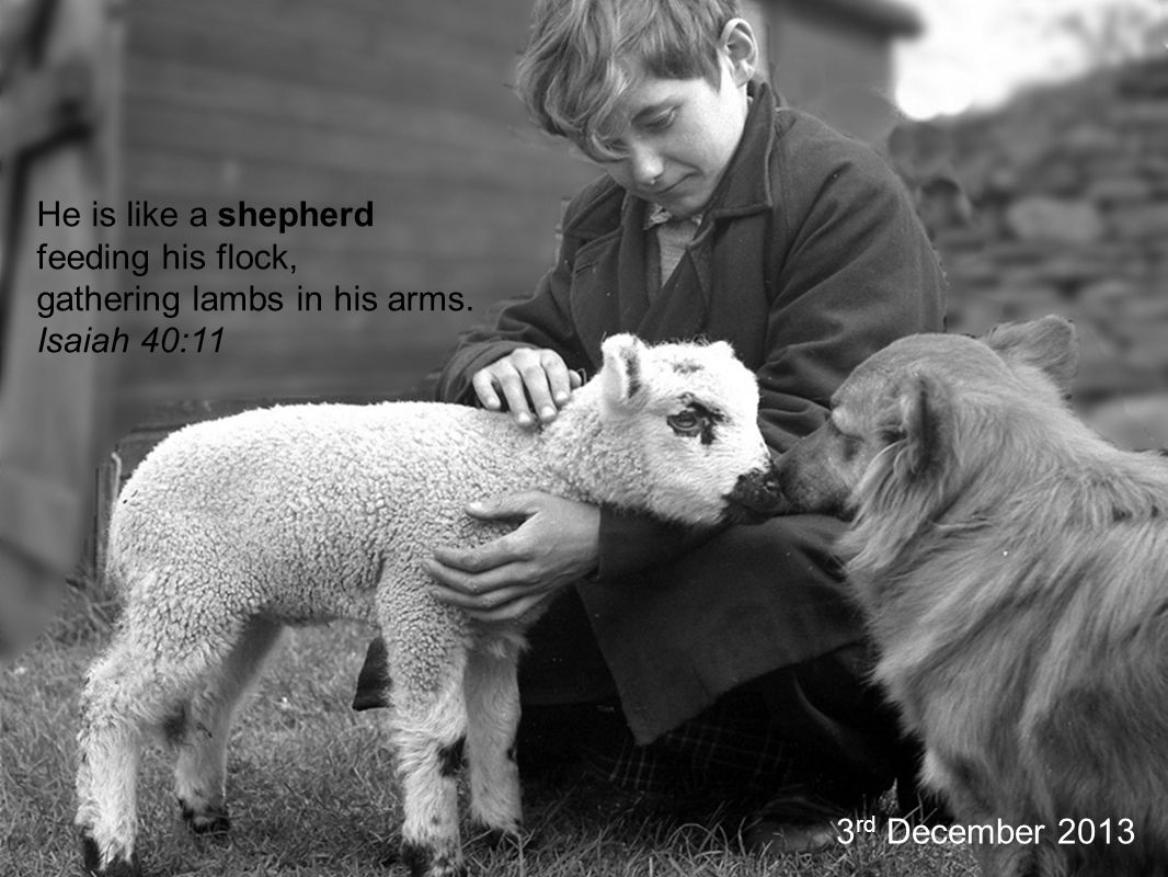 He is like a shepherd feeding his flock, gathering lambs in his arms.