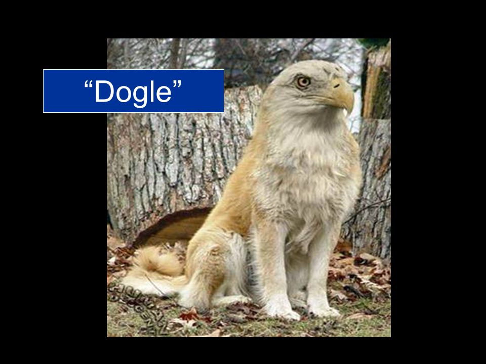 Dogle