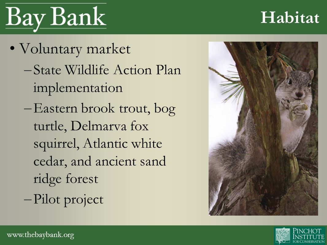 www.thebaybank.org Voluntary market – State Wildlife Action Plan implementation – Eastern brook trout, bog turtle, Delmarva fox squirrel, Atlantic white cedar, and ancient sand ridge forest – Pilot project Habitat