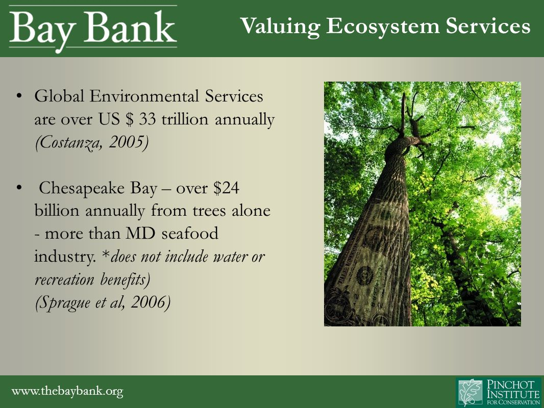 www.thebaybank.org Valuing Ecosystem Services Global Environmental Services are over US $ 33 trillion annually (Costanza, 2005) Chesapeake Bay – over $24 billion annually from trees alone - more than MD seafood industry.