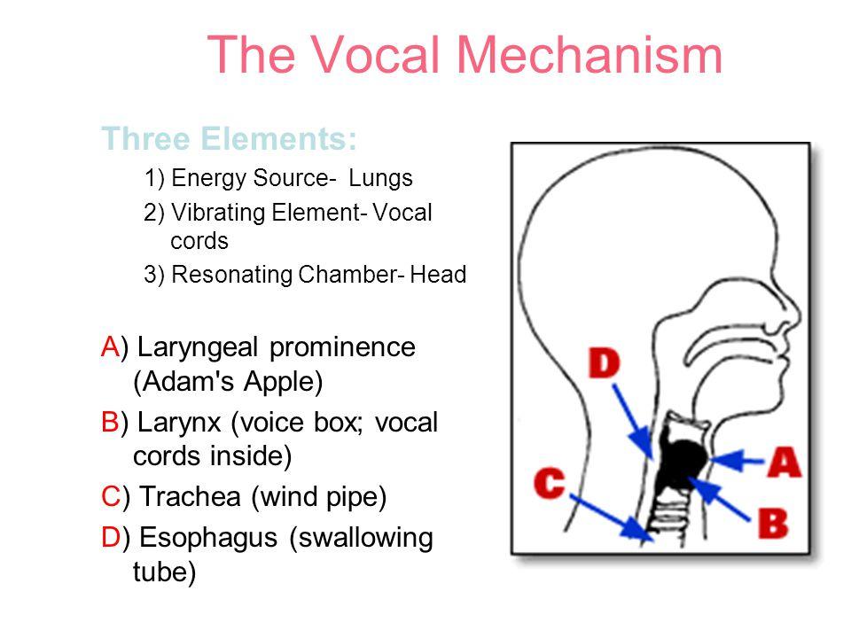 Vocal Mechanism--Larynx