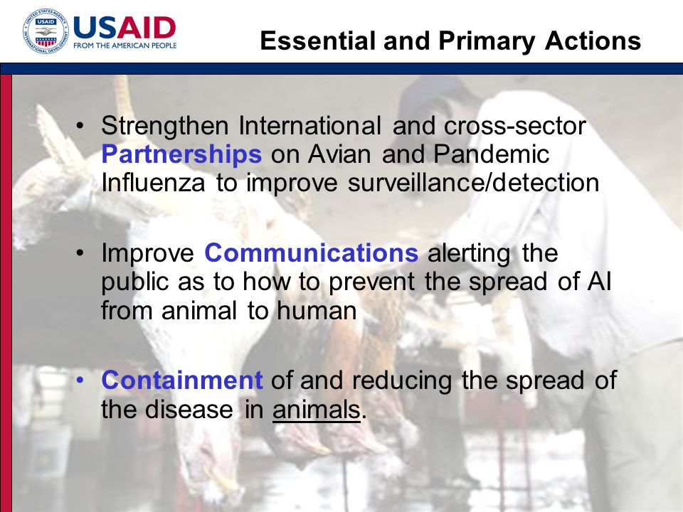 Globally the USG is focused on building: Strong leadership, coordination & communicationStrong leadership, coordination & communication Essential and Primary Activities that build:Essential and Primary Activities that build: –Partnerships to improve Surveillance/Detection –Communications to improve Preparedness –Rapid Response for Containment in animals The US Government Strategy