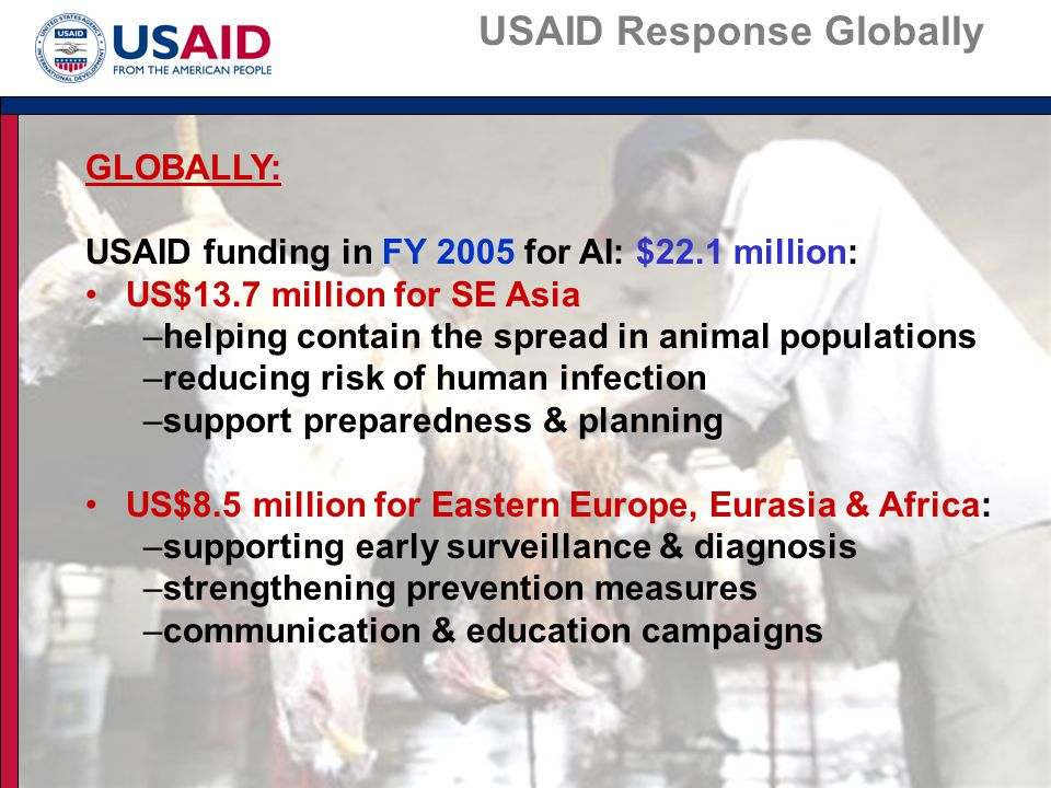 GLOBALLY: USAID funding in FY 2005 for AI: $22.1 million: US$13.7 million for SE Asia –helping contain the spread in animal populations –reducing risk of human infection –support preparedness & planning US$8.5 million for Eastern Europe, Eurasia & Africa: –supporting early surveillance & diagnosis –strengthening prevention measures –communication & education campaigns USAID Response Globally