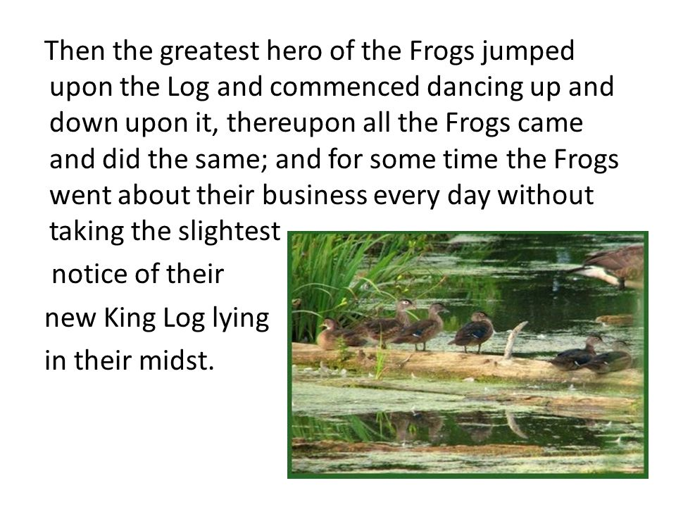 Then the greatest hero of the Frogs jumped upon the Log and commenced dancing up and down upon it, thereupon all the Frogs came and did the same; and for some time the Frogs went about their business every day without taking the slightest notice of their new King Log lying in their midst.