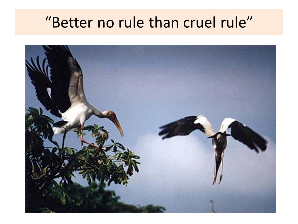 Better no rule than cruel rule