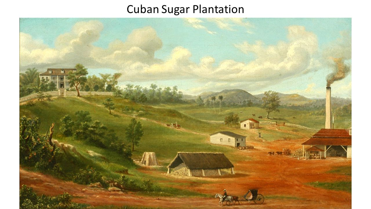 Cuban Sugar Plantation