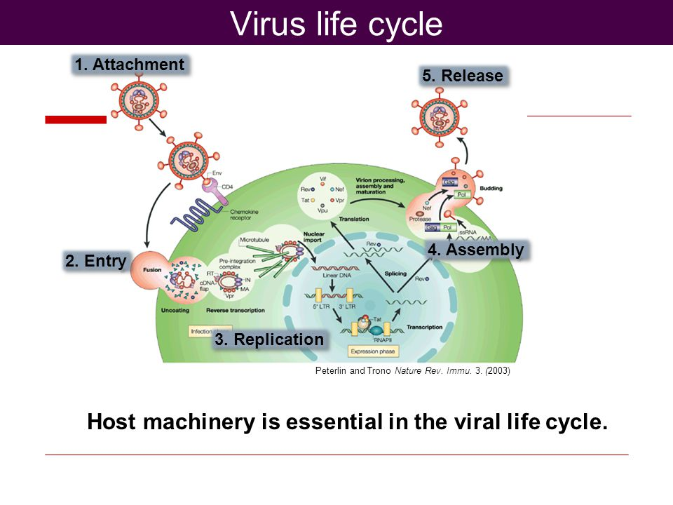 Peterlin and Trono Nature Rev. Immu. 3. (2003) Virus life cycle 1.
