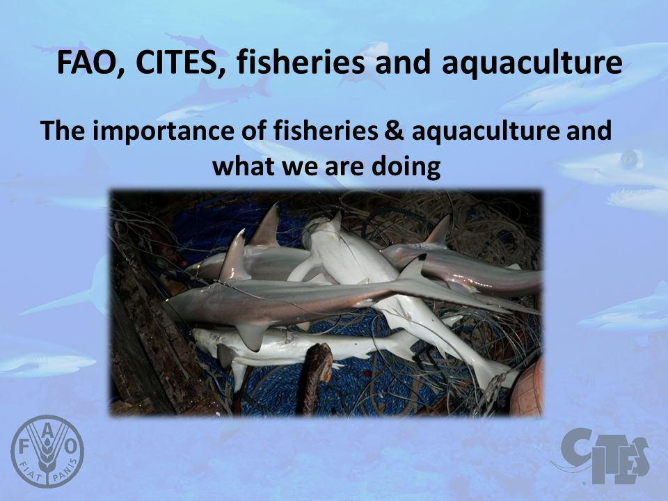 FAO, CITES, fisheries and aquaculture The importance of fisheries & aquaculture and what we are doing