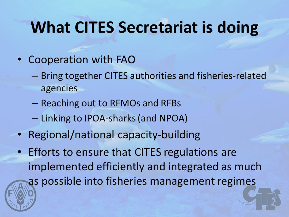 What CITES Secretariat is doing Cooperation with FAO – Bring together CITES authorities and fisheries-related agencies – Reaching out to RFMOs and RFBs – Linking to IPOA-sharks (and NPOA) Regional/national capacity-building Efforts to ensure that CITES regulations are implemented efficiently and integrated as much as possible into fisheries management regimes