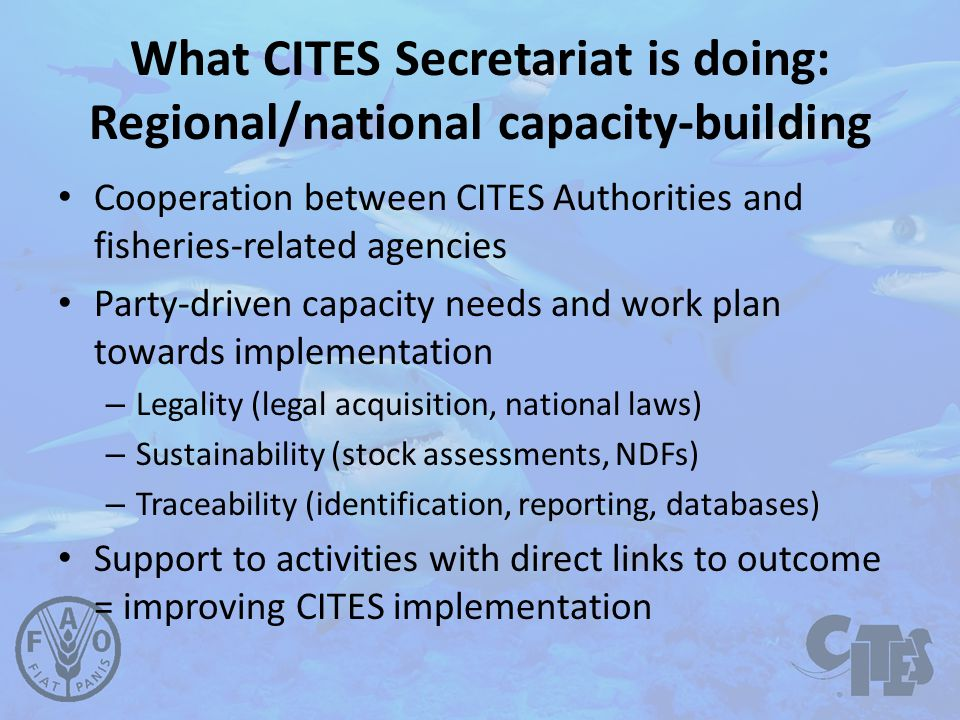 What CITES Secretariat is doing: Regional/national capacity-building Cooperation between CITES Authorities and fisheries-related agencies Party-driven capacity needs and work plan towards implementation – Legality (legal acquisition, national laws) – Sustainability (stock assessments, NDFs) – Traceability (identification, reporting, databases) Support to activities with direct links to outcome = improving CITES implementation