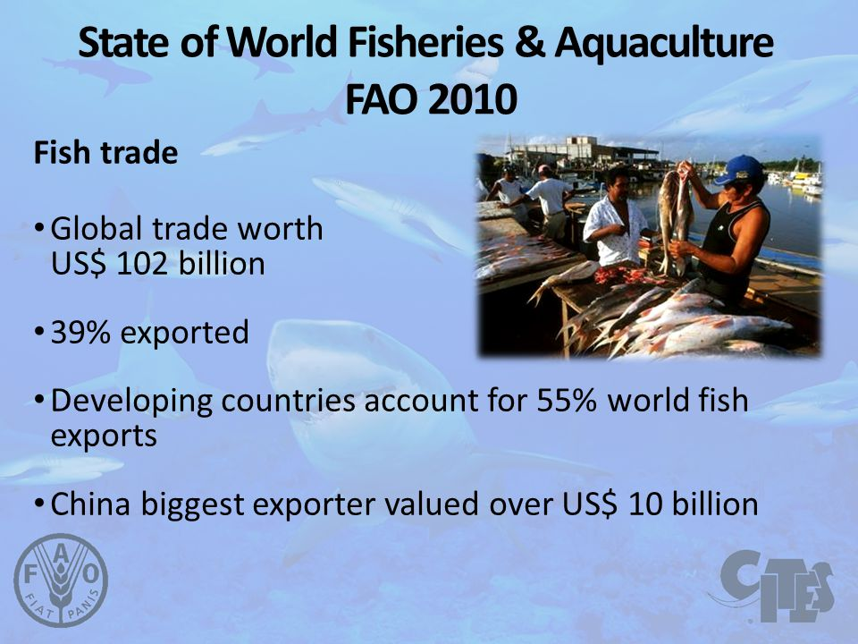 Fish trade Global trade worth US$ 102 billion 39% exported Developing countries account for 55% world fish exports China biggest exporter valued over US$ 10 billion State of World Fisheries & Aquaculture FAO 2010 4