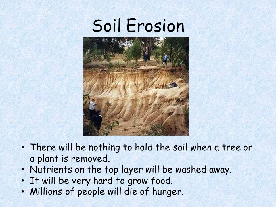 Soil Erosion There will be nothing to hold the soil when a tree or a plant is removed.