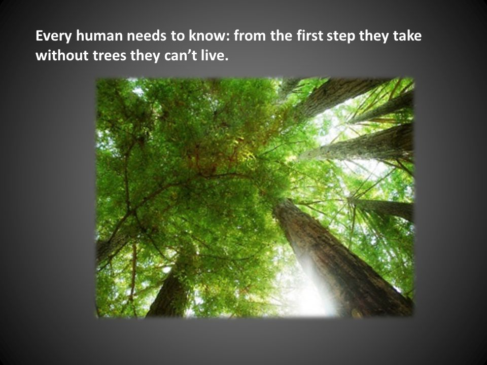 Every human needs to know: from the first step they take without trees they can't live.