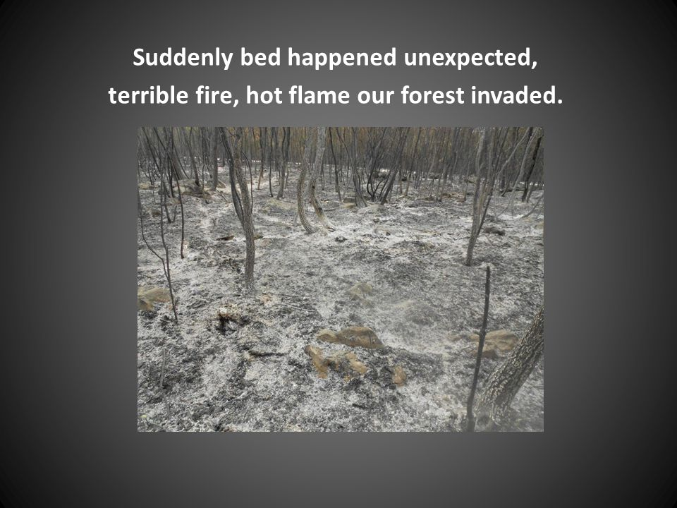 Suddenly bed happened unexpected, terrible fire, hot flame our forest invaded.