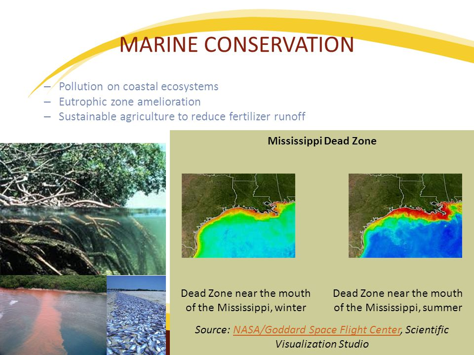 MARINE CONSERVATION – Pollution on coastal ecosystems – Eutrophic zone amelioration – Sustainable agriculture to reduce fertilizer runoff Mississippi Dead Zone Dead Zone near the mouth of the Mississippi, winter Dead Zone near the mouth of the Mississippi, summer Source: NASA/Goddard Space Flight Center, Scientific Visualization StudioNASA/Goddard Space Flight Center