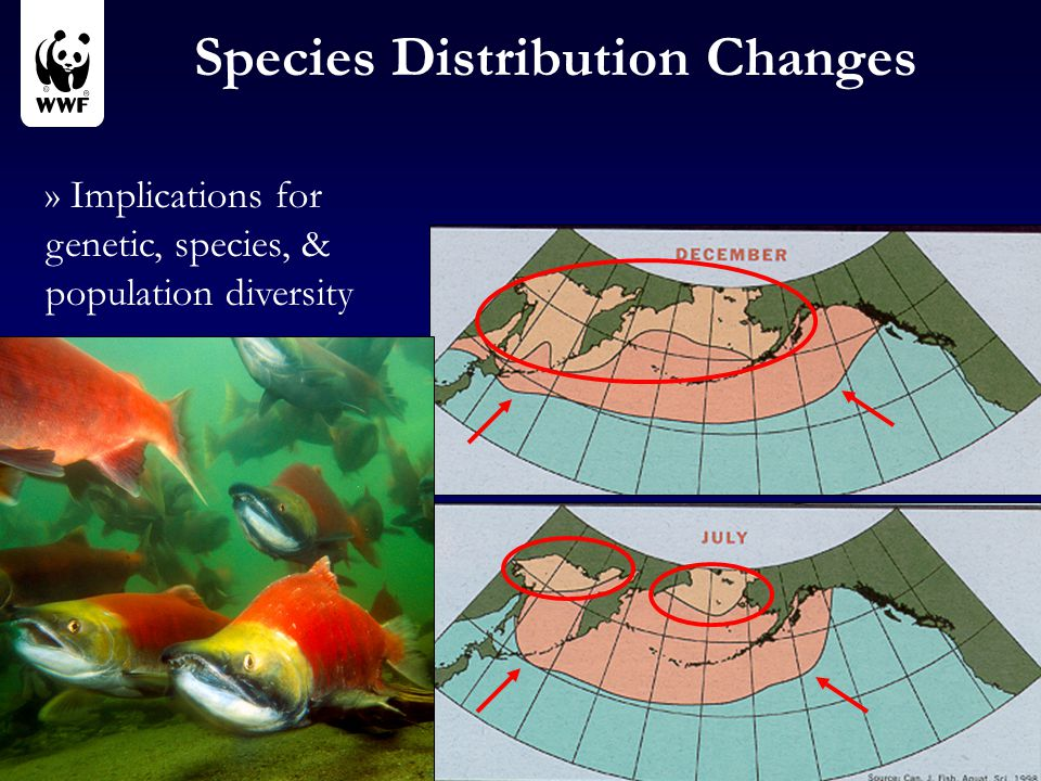 Species Distribution Changes » Implications for genetic, species, & population diversity