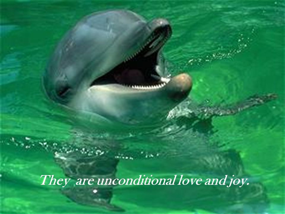 They are very special messengers from the spirit world.