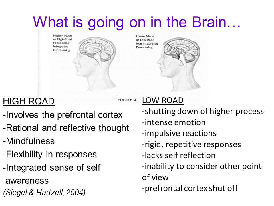 HIGH ROAD -Involves the prefrontal cortex -Rational and reflective thought -Mindfulness -Flexibility in responses -Integrated sense of self awareness (Siegel & Hartzell, 2004) LOW ROAD -shutting down of higher process -intense emotion -impulsive reactions -rigid, repetitive responses -lacks self reflection -inability to consider other point of view -prefrontal cortex shut off What is going on in the Brain…