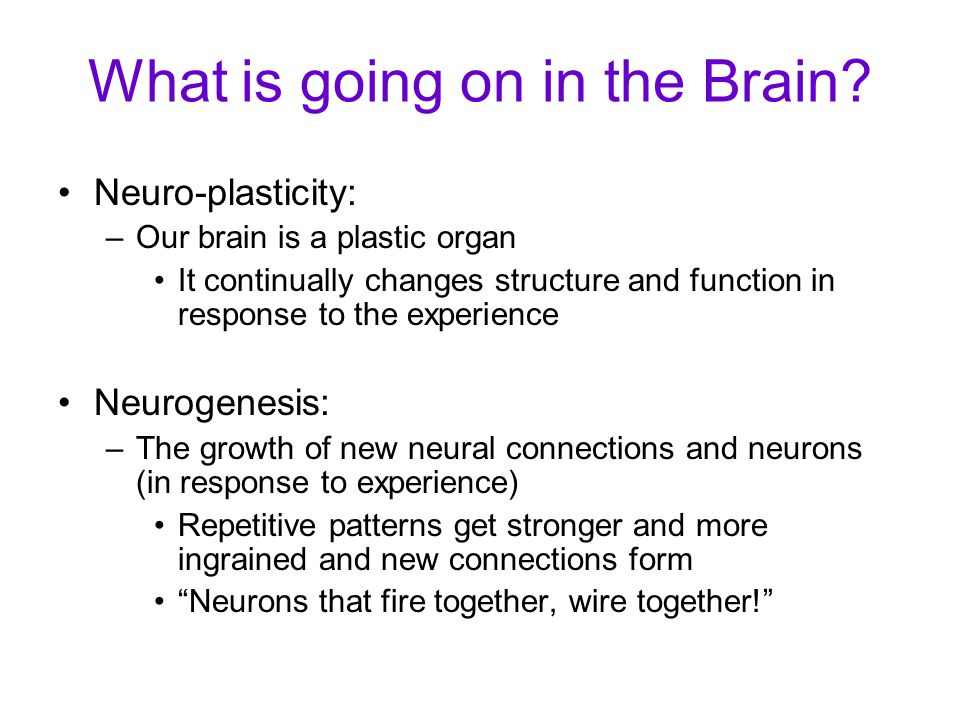 What is going on in the Brain.