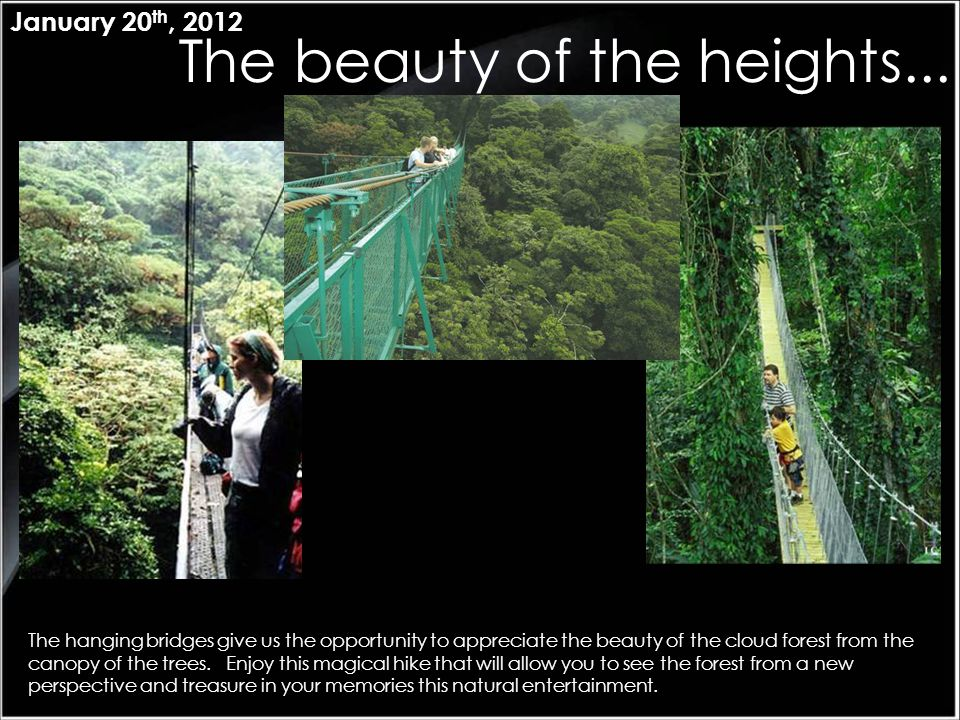 The beauty of the heights... January 20 th, 2012 The hanging bridges give us the opportunity to appreciate the beauty of the cloud forest from the can