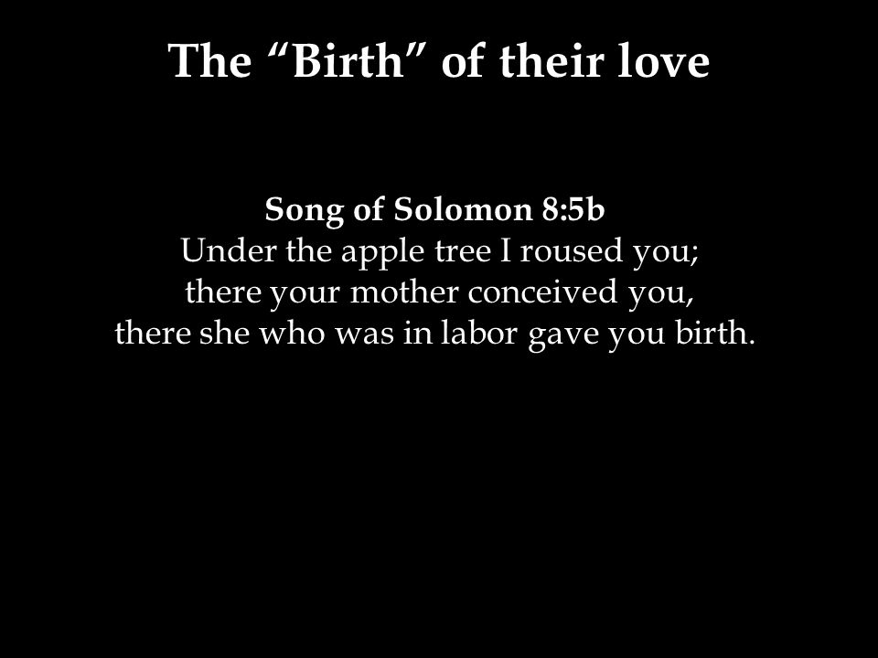 The Birth of their love Song of Solomon 8:5b Under the apple tree I roused you; there your mother conceived you, there she who was in labor gave you birth.