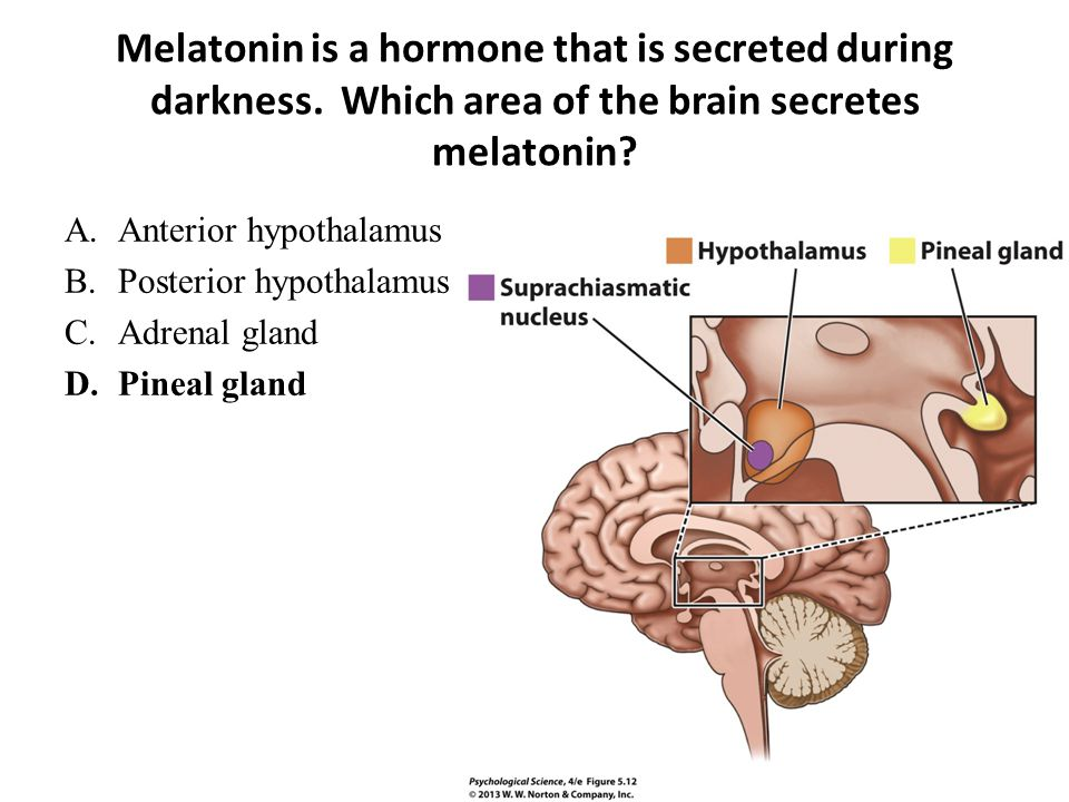 Melatonin is a hormone that is secreted during darkness. Which area of the brain secretes melatonin? A.Anterior hypothalamus B.Posterior hypothalamus