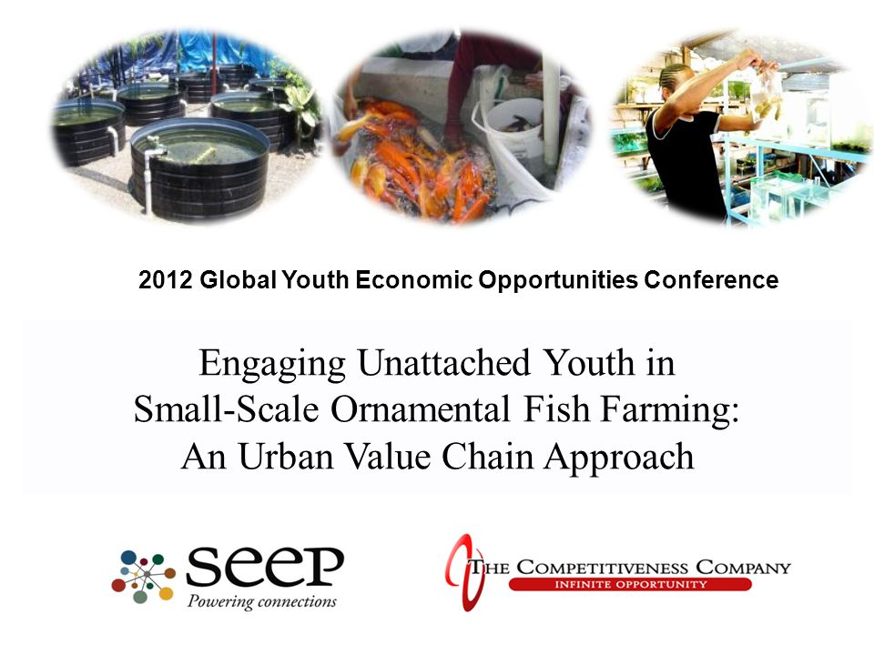 Engaging Unattached Youth in Small-Scale Ornamental Fish Farming: An Urban Value Chain Approach 2012 Global Youth Economic Opportunities Conference