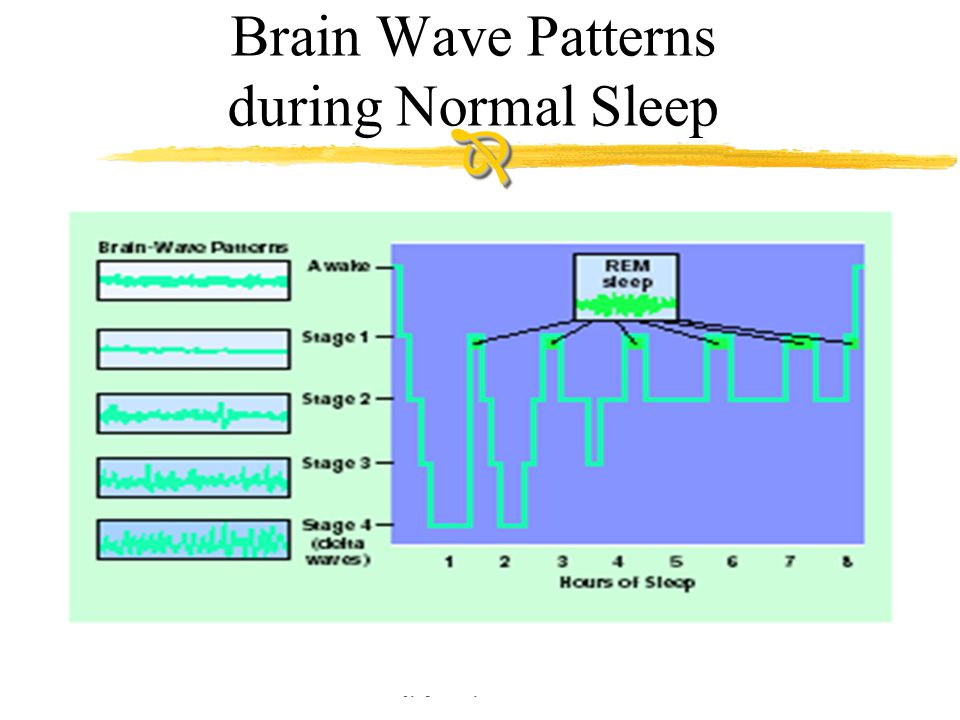 Copyright © Allyn & Bacon 2002 Brain Wave Patterns during Normal Sleep 