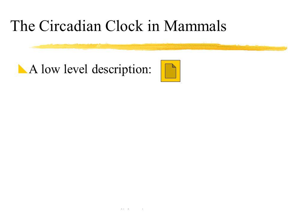 Copyright © Allyn & Bacon 2002 The Circadian Clock in Mammals  A low level description: